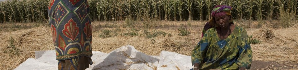 Women clean wheat, grown in a field on the outskirts of Bol, the capital of Lac Region.