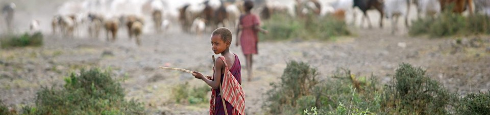 A boy, a member of the Masai ethnic group, herds cattle in a rural area outside the town of Morogoro, Morogoro Region.