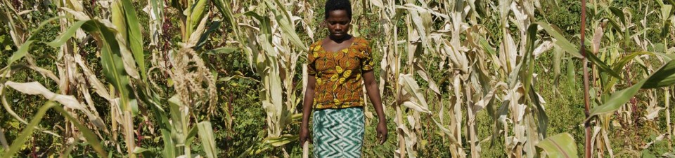 Christina John (14 years old) works in in a corn field near her house in Rebu village in Tarime district of Mara region.