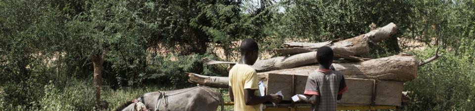 Deux enfants transportent du bois dans une charrette pour aller le vendre au marché avant la fête de la Tabaski.