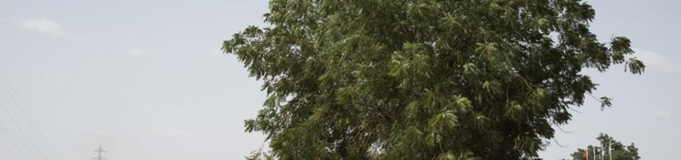 Sur le site de «La Ceinture Verte» près de Niamey, un jeune homme se repose à l'ombre d'un des derniers arbres qui constituait ce rideau d'arbres à la lisière de Niamey. Le projet a été́ abandonné depuis que la municipalité́ a vendu les terrains à des entreprises privées.